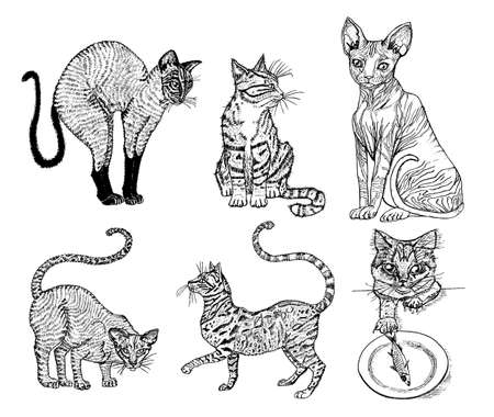 Set of Pedigree cats. Kittens collection. Icons of vector Illustration, line art. Hand drawn Pets. Engraved vintage sketch. Sphynx, Bengal, Oriental Shorthair. Illustration