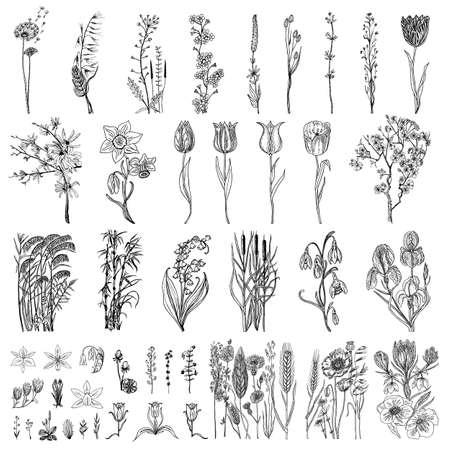 Flores silvestres con hojas. Conjunto de planta botánica de boda con hojas y brotes. Hierba de primavera orgánica botánica. Dibujado a mano grabado en bosquejo del doodle. Colección de tarjetas y etiquetas, libros y pancartas. Ilustración de vector
