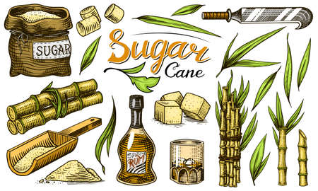 Cane sugar with leaves. Set of Sugarcane plants. Stalks and bottle of rum, Wooden plate spoon, Cubes and juice, Bamboo, signboard inscription. Engraving Hand drawn food and natural ingredients