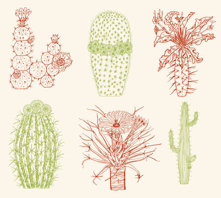 Home cactus plants and flowers. Set of cozy cute elements. Collection of Exotic or tropical succulents with prickles. Engraved hand drawn in old sketch and vintage doodle style