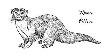 Loutre de rivière sauvage, animal de la forêt. Style monochrome vintage. Mammifère en Eurasie et en Amérique du Nord. Croquis dessiné main gravé pour bannière ou étiquette