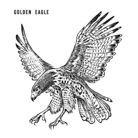 Golden eagle. Wild forest bird of prey. Hand drawn sketch graphic style.  Fashion patch. Print for  t-shirt, Tattoo or badges.