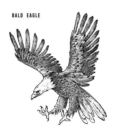 Bald eagle. Wild forest bird of prey. Hand drawn sketch graphic style.  Fashion patch. Print for  t-shirt, Tattoo or badges.  イラスト・ベクター素材