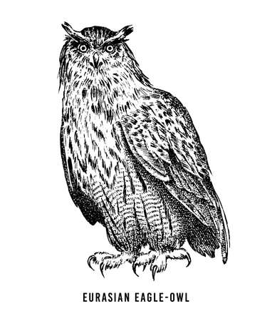 Eurasian eagle owl. Wild forest bird of prey. Hand drawn sketch graphic style.  Fashion patch. Print for  t-shirt, Tattoo or badges.  イラスト・ベクター素材