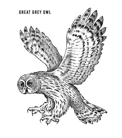 Great grey owl. Wild forest bird of prey. Hand drawn sketch graphic style.  Fashion patch. Print for  t-shirt, Tattoo or badges.