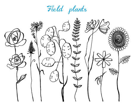 Field Flowers with leaves. Set of Wedding botanical Wild plant with buds. Botanical organic spring herb. Engraved hand drawn in doodle sketch.