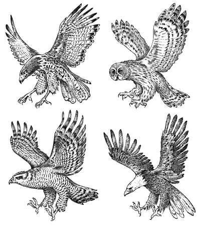 Set of realistic birds. Goshawk, Pallid harrier, Black kite, Owl and eagle. Hand drawn vector sketch in engraved graphic style.