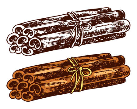 Cinnamon sticks isolated on transparent background. Hand drawn engraved vintage sketch for labels. Vector illustration. Stockfoto - 129921003