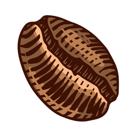 Coffee bean in vintage style. Hand drawn engraved retro sketch for labels. Ingredient for making cappuccino, template for a label or menu. Иллюстрация