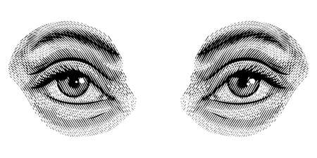 Human eyes in vintage style. Female look and eyebrows. Visual System, Sensory Organ Components. Hand drawn engraved sketch subject physiology or anatomy.