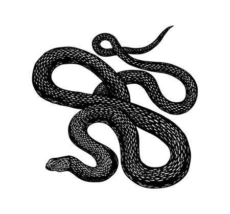 Python in Vintage style. Serpent or poisonous viper snake. Engraved hand drawn old reptile sketch for Tattoo, sticker or logo or t-shirts. Logos