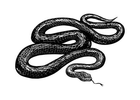 Python in Vintage style. Serpent or poisonous viper snake. Engraved hand drawn old reptile sketch for Tattoo, sticker or logo or t-shirts. Illustration