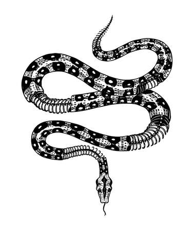 Half-skeleton of a milk snake in Vintage style. Serpent cobra or python or poisonous viper. Engraved hand drawn old reptile sketch for Tattoo, sticker or logo or t-shirts. Ilustracja