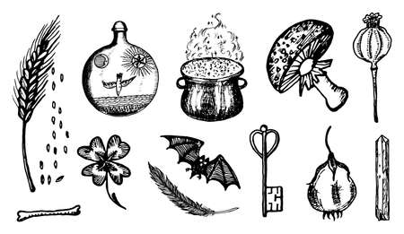 ingredients for witchcraft set in vintage style. Fantasy magic flower. Hand drawn engraved old retro sketch. Vector illustration