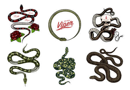 Set of snakes reptiles. Serpent cobra and python and Poisonous Viper. Engraved hand drawn old sketch for Tattoo. Vintage anaconda for sticker or t-shirts.