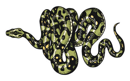 Snake in Vintage style. Serpent cobra or python or poisonous viper. Engraved hand drawn old reptile sketch for Tattoo. Anaconda for sticker or t-shirts. Ilustração