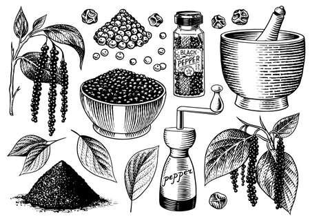 Schwarzer Pfeffer im Vintage-Stil. Mörser und Stößel, Piment oder Pfefferkörner, Mühle und getrocknete Samen, ein Bündel Gewürze. Kräuterwürze zum Kochen. Gravierte handgezeichnete Vektorskizze für den Hintergrund