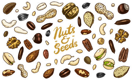Nuts mix background. Seeds and granule, corn and grain. Hazelnut, Walnut, Almonds. Food concept. Top view. Vintage poster. Engraved hand drawn sketch. Set of doodle icons, signs in Monochrome style Archivio Fotografico - 136638642