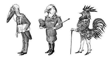 Bird man, eagle and marabou head in military uniform. Dressed Rooster or Cock cowboy. Hand drawn fashionable cockerel. Engraved old monochrome sketch. Mythical fashion creature in hipster style.