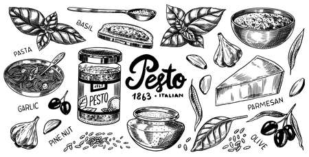 Pesto sauce set. Basil leaves, garlic, pine nuts, hard parmesan cheese, olive oil, pesto alla genovese. Spicy condiment, glass bottle, wooden spoon or dish, bunch of seeds. Engraved hand drawn sketch.  イラスト・ベクター素材
