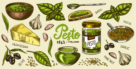 Pesto sauce set. Basil leaves, garlic, pine nuts, hard parmesan cheese, olive oil, pesto alla genovese. Spicy condiment, glass bottle, wooden spoon or dish, bunch of seeds. Engraved hand drawn sketch. Ilustracja
