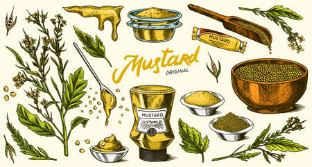 Mustard seeds set. Spicy condiment, seasoning bottle, packaging and leaves, wooden spoons, plant, sauce in gravy boat, whole and ground grains. Vintage background poster. Engraved hand drawn sketch
