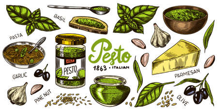 Pesto sauce set. Basil leaves, garlic, pine nuts, hard parmesan cheese, olive oil, pesto alla genovese. Spicy condiment, glass bottle, wooden spoon or dish, bunch of seeds. Engraved hand drawn sketch.