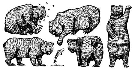 Grizzly bear set. Collection of hunting Brown wild animals in different poses. Hand drawn engraved old sketch for T-shirt, tattoo or label or poster. Side and front view. Vector illustration.