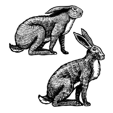 Wild hares. Rabbits are sitting. Forest bunny or coney. Hand drawn engraved old sketch for T-shirt, tattoo or label or poster. Vector illustration Illustration