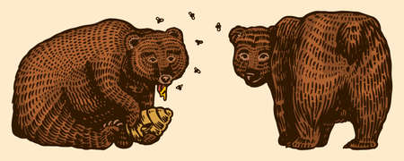 Grizzly bears. Hunting Brown wild animal eats honey and turns back. Hand drawn engraved old sketch for T-shirt, tattoo or label or poster. Side and front view. Vector illustration.