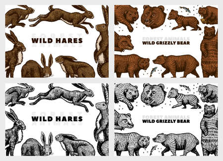 Grizzly bear and hares background. Rabbits and bunny, Brown wild animals. Hand drawn engraved old sketch for T-shirt, cards or banner or poster. Side and front view. Vector illustration.