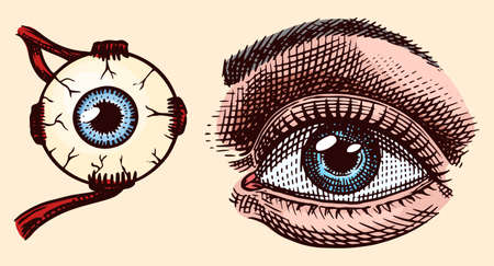 The human eye of the left side of the face. White sclera with blood vessels, blue iris, and the black pupil. Organ Visual system. Hand drawn engrave illustration. Sketch for medicine poster or banners