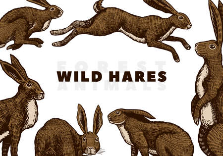 Wild hares background. Rabbits are sitting and jumping. Forest bunny. Hand drawn engraved old sketch for T-shirt, cards or banner or poster. Vector illustration.
