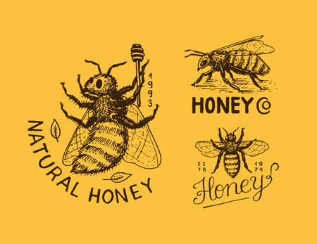 Honey and bees. Vintage  typography, shop or signboards. Badge for t-shirts. Hand Drawn engrave sketch. Vector illustration. 向量圖像