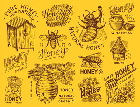 Honey and bees set. Beekeeper man and Honeycombs and hive and apiary. Vintage typography, shop or signboards. Badge for t-shirts. Hand Drawn engrave sketch. Vector illustration.