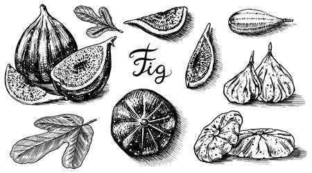 Fresh figs set. Detox spice. Dried fruit, cut pieces. Foliage, plant and branch. Vector Engraved hand drawn sketch for label, poster or menu. Illusztráció