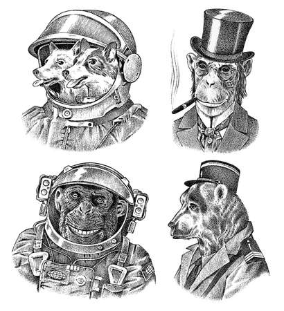 Monkey and Dogs astronaut, Bear in military style. Chimpanzee Spaceman dressed in Suit. Fashion Animal character. Hand drawn sketch. Vector engraved illustration for label, logo and T-shirts or tattoo
