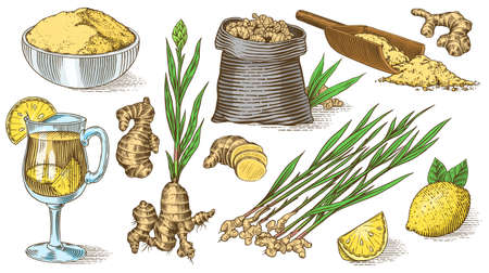 Ginger root, Chopped rhizome, Fresh plant, Bag and tea in glass cup. Vector Engraved hand drawn sketch. Pieces of ingredient set. Detox spice. Vettoriali