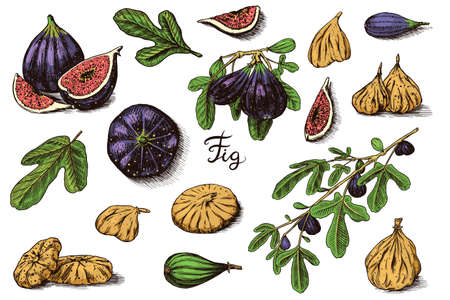 Fresh figs set. Detox spice. Dried fruit, cut pieces. Foliage, plant and branch. Vector Engraved hand drawn sketch for label, poster or menu. Vettoriali
