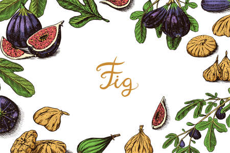 Fresh figs Poster or banner. Detox spice. Dried fruit background. Foliage, plant and branch. Vector Engraved hand drawn sketch for label, poster or menu. Vettoriali