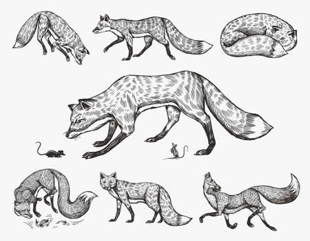 Wild red fox set. Forest ginger animal flying and jumping. Vector Engraved hand drawn Vintage sketch for label or poster.