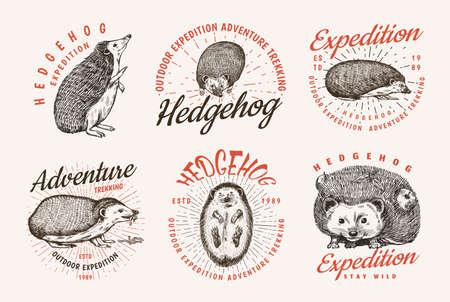 Hedgehog badge set. Spiny forest wild animal label. Vector Engraved hand drawn Vintage old sketch for stamp, t-shirt or typography.