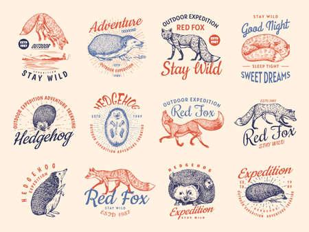 Red fox and Hedgehog badges set. Forest ginger wild animal label. Vector Engraved hand drawn Vintage old sketch for stamp, t-shirt or typography.