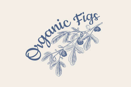 Fresh fig badge. Fruit Foliage label. Detox spice. Foliage, plant and branch. Vector Engraved hand drawn sketch for stamp, t-shirt or typography or menu.