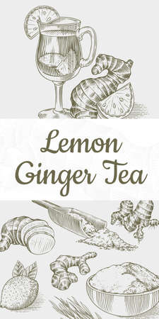 Ginger tea poster. Chopped rhizome or root, Fresh plant, Bag and tea in glass cup. Vector Engraved hand drawn sketch. Pieces of ingredient set. Detox spice.