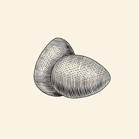 Eggs and shell, farm product. Engraved hand drawn vintage sketch. Woodcut style. Vector illustration