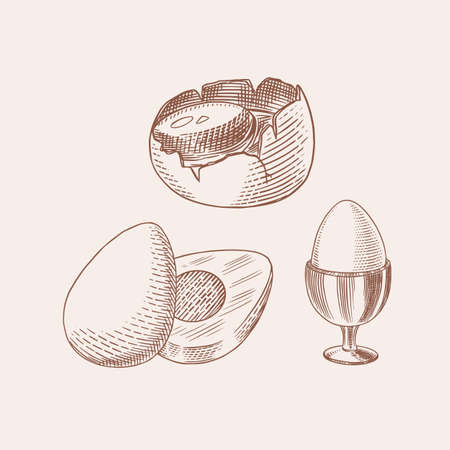 Eggs and and yolk, shell and farm product. Engraved hand drawn vintage sketch. Woodcut style. Vector illustration for menu or poster.