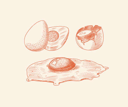 Eggs and and yolk, Fried scrambled omelette, shell and farm product. Engraved hand drawn vintage sketch. Woodcut style. Vector illustration for menu or poster.
