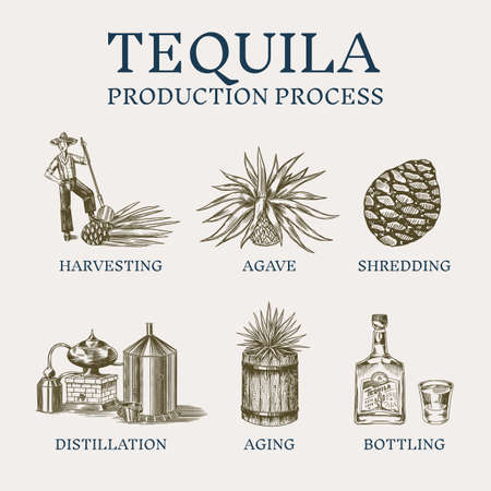 Tequila production process. Glass bottle, shot with lime, Distilled alcohol, blue agave Plant, barrel and farmer and harvest. Retro poster or banner. Engraved hand drawn vintage sketch. Vector Illustration