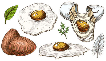 Eggs and scrambled omelette, farm product. Engraved hand drawn vintage sketch. Woodcut style. Vector illustration for menu or poster.